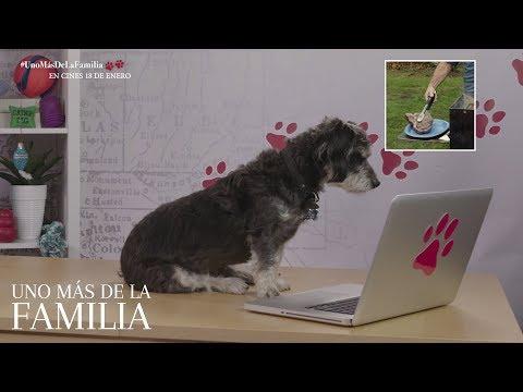 UNO MÁS DE LA FAMILIA. Gatos y perros reaccionan al tráiler. En cines 18 de enero.