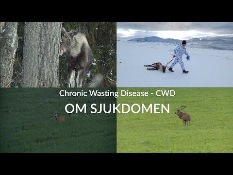 Chronic wasting disease (CWD) är en allvarlig sjukdom hos hjortdjur. Under åren 2018-2020 pågår en landsomfattande övervakning av sjukdomen för att kartlägga förekomsten av CWD hos svenska hjortdjur. Syftet är att vid behov kunna vidta åtgärder för att begränsa spridningen av sjukdomen och de negativa effekter som sjukdomen har på hjortdjurspopulationer.