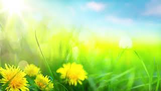 Relaxing Morning Music - Calming And Positive Feelings (Ashley)  Part 198