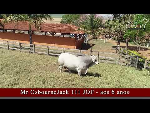 MR. OSBOURNEJACK 111 13 - Brahman