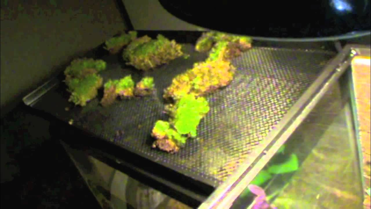 Firebelly Toad Habitat Setup Youtube