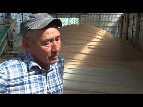 Уборка зерновых в хозяйстве побединского фермера Бектлева Дускалиева
