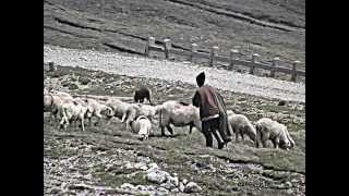 Aurel Tămaş   A ciobanilor by yonutz