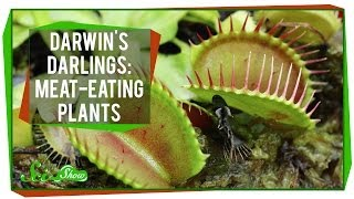 Darwin's Darlings: Meat-Eating Plants