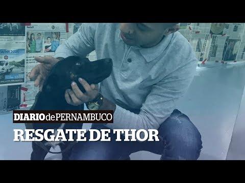 O abandono e resgate do cãozinho Thor