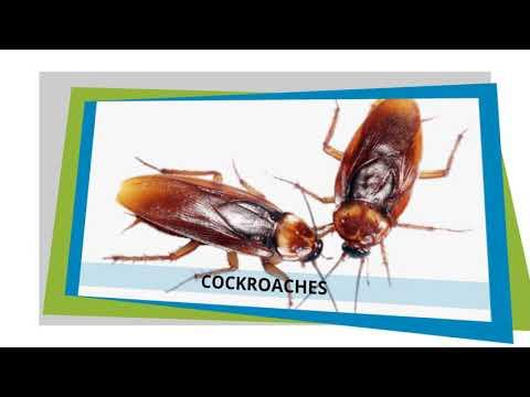 Pest Control - Eagleby