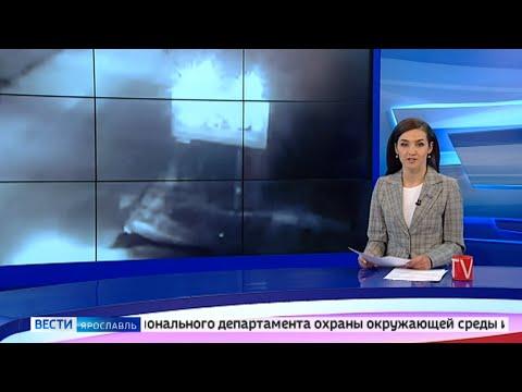 Сегодня стало известно о судьбе хищника, напавшего на человека в Ярославле