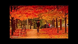 Four Seasons Vivaldi - 10 Hours - Relaxing Classical Music For Studying, Concentration And Sleeping