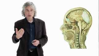 Steven Pinker: Linguistics as a Window to Understanding the Brain | Big Think