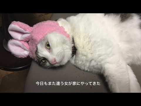 中村千尋「吾輩は猫である」