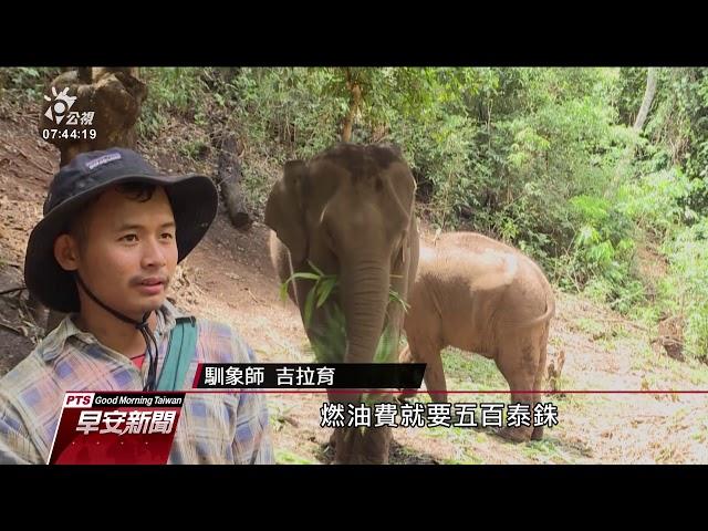 觀光停擺大象失業 長途跋涉回老家