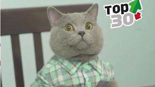 Aaron's Animal's TOP 30 Best Of The Best  || FunnyVines