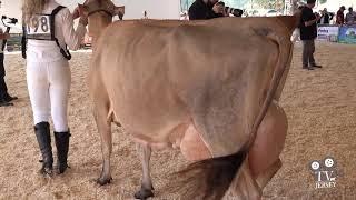Circuito Nacional da Raça Jersey 2019 em Braço do Norte / SC