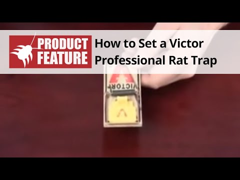 Fonejacker Mouse Trap How to Set a Victor Mouse Trap
