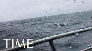 Woman On Family Boating Adventure Calls Cops About Whales | TIME