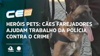 HERÓIS PETS: cães farejadores ajudam trabalho da polícia contra o crime