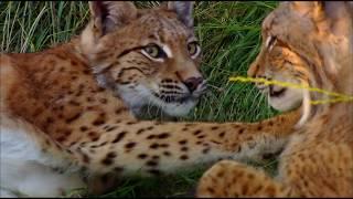 Thế giới động vật - Nước Nga hoang dã | Tập 1 | Thuyết minh | Phim khoa học | Những Nơi Tôi Đến