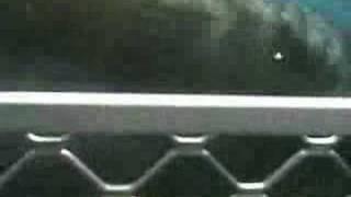 ホオジロザメ5