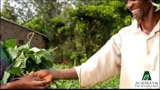 Agribank Zimbabwe