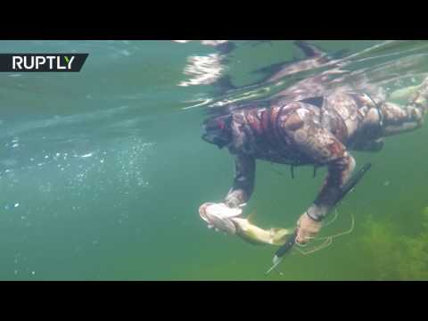 بوتين يصطاد السمك تحت الماء