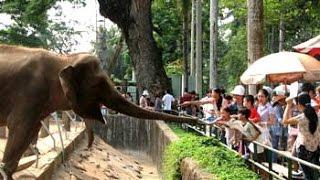 Thảo Cầm viên Sài Gòn (Sở thú) - Wildlife Park