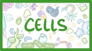 GCSE Biology - Cell Types and Cell Structure #1