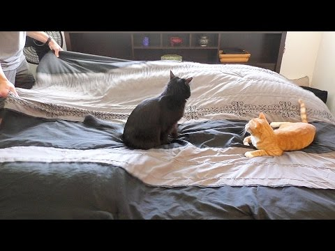 Making a Bed With Cats Around,