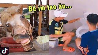 Cho Tao Ăn Đi Mày 😂😂😂 Tik Tok Việt Nam Xem Là Cười Sặc Sụa 😂😂😂