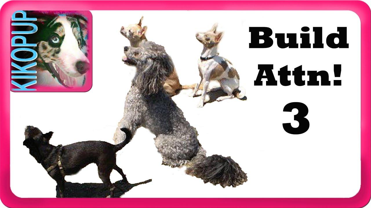 Obedience Dog Training: Februari 2018