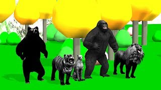 Black Animals Finger Family song For Kids | Gorilla,nursery rhymes,tiger,cheetha,arcus n media Kidz
