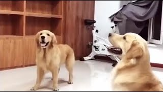Try Not To Laugh At This Ultimate Funny Dog & Cat Video Compilation
