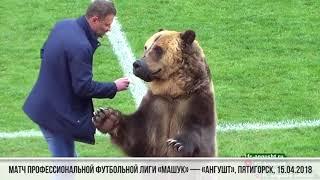 """Medvjed na utakmici predao loptu sudiji i """"poslao poruku"""" navijačima (VIDEO)"""