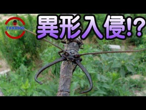 異形昆蟲入侵 - 看完覺得蟑螂十分可愛 (上)