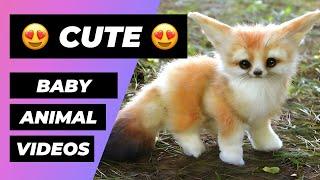 Baby Animals 🔴 Animales Bebés | Animal Planet Videos (2018)
