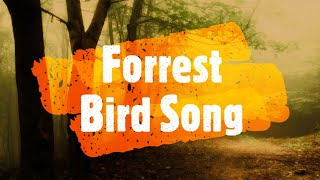 Forrest Bird Song - Over an hour of relaxing natural sounds and tinnitus relief