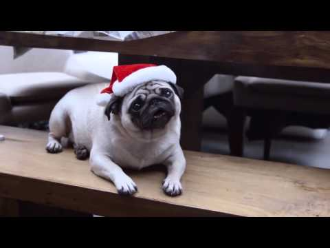 Vision Direct - Behind the Scenes 'A Pug's Christmas'