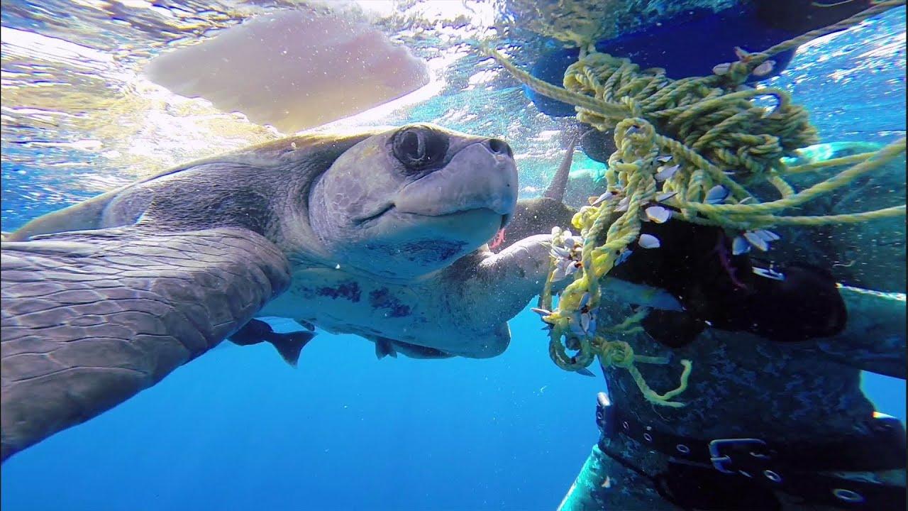Un plongeur sauve une tortue de mer qui vient le remercier