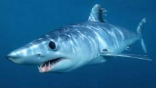 鮫スライドショー9