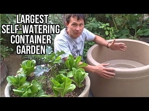 Largest Self Watering Container Garden Lasts A Month