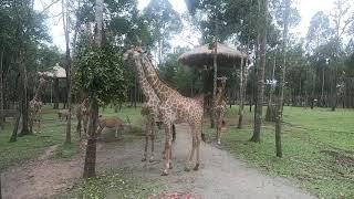 Trãi nghiệm safari Phú Quốc, ngày 17.07.2019 (P4)
