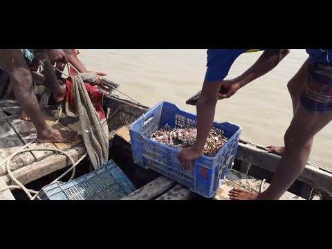 Catching fish with Boat  in the river? catching fish in unique?fishing traps?best fishing videos