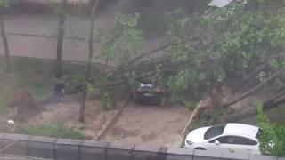 Ураган в Москве валит деревья. Человек борется с ураганом