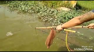 Đi kích cá ở ruộng ! Tưởng ít Hoá nhiều không tưởng...?