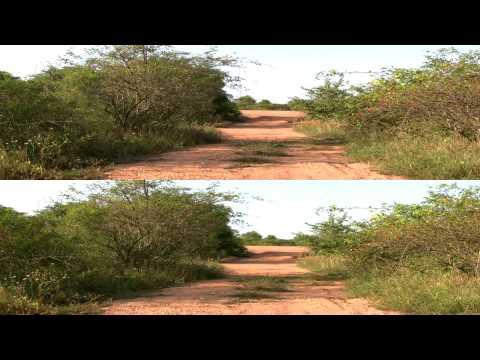 Природа 3D (HD)