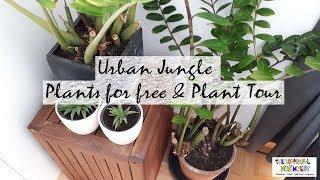 URBAN JUNGLE: Plants for free & Plant Tour