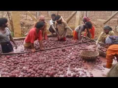 The beet washers