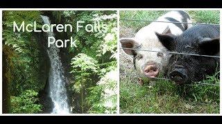 McLaren Falls Park, Farm Animals, Waterfall, New Zealand/Парк, Животные, Водопад