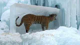 Animals Frozen In Time