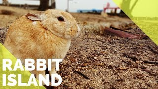 RABBIT ISLAND | OKUNOSHIMA | THINGS TO DO IN HIROSHIMA, JAPAN | The Tao of David