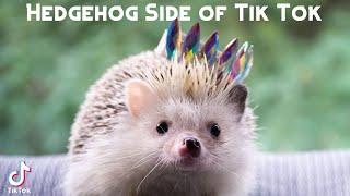 Hedgehog Side of Tik Tok